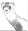 Ferret Visualisation icon